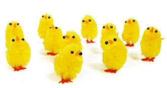 Easter-bunchofchicks