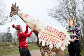 ALL CREATURES GREAT AND SMALL PREPARE FOR CHRISTMAS JUMPER DAY