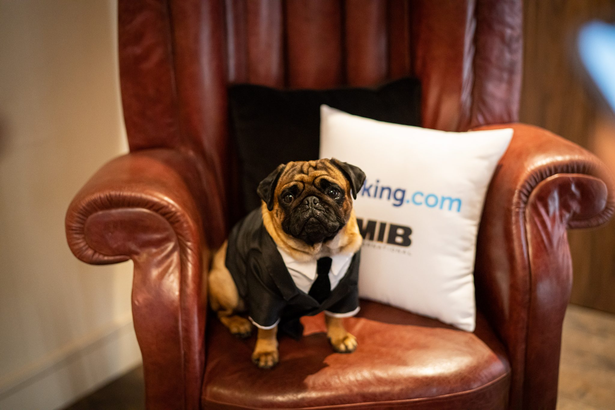 Men in Black HQ Pug