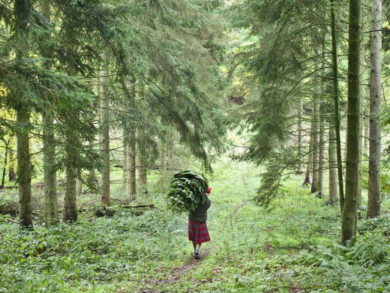 PINES AND NEEDLES CHRISTMAS ADVERT 2012, SURREY, ENGLAND, 21/10/12