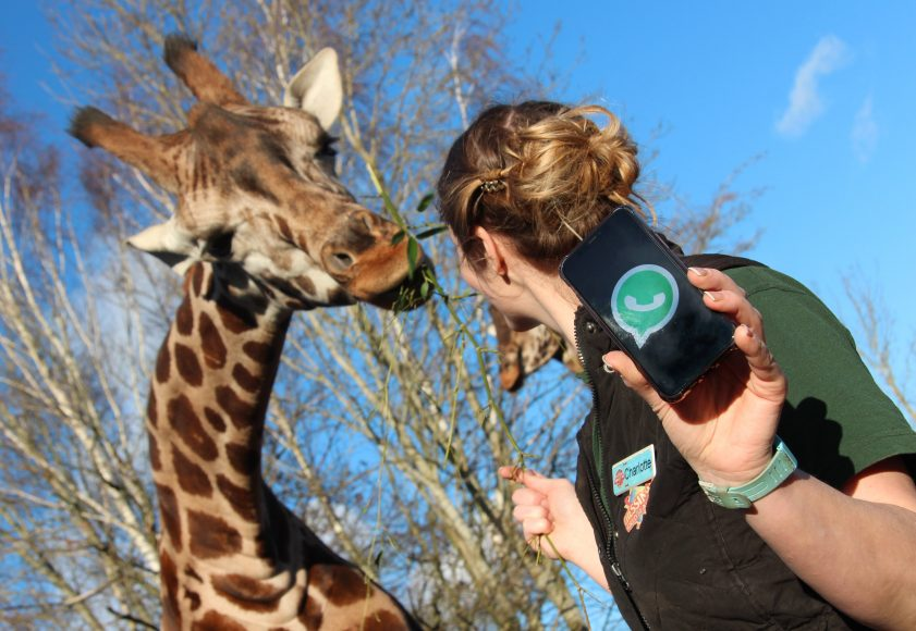Chessington World of Adventures Resort launches its brand-new service, 'Wild WhatsApp', allowing those with burning animal-related questions to contact the Resort's Zoo Keepers direct
