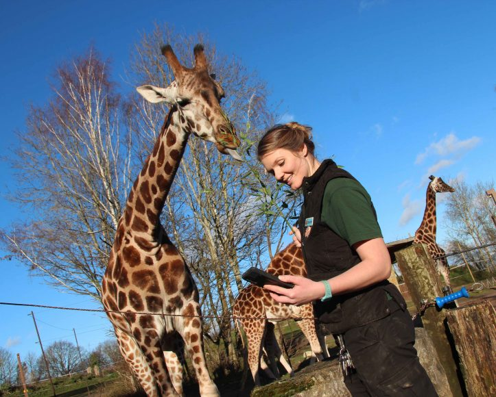 Chessington World of Adventures Resort launches its brand-new service, 'Wild WhatsApp', allowing those with burning animal-related questions to contact the Resort's Zoo Keepers direct2
