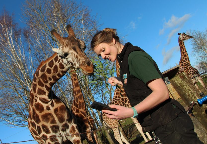 Chessington World of Adventures Resort launches its brand-new service, 'Wild WhatsApp', allowing those with burning animal-related questions to contact the Resort's Zoo Keepers direct3