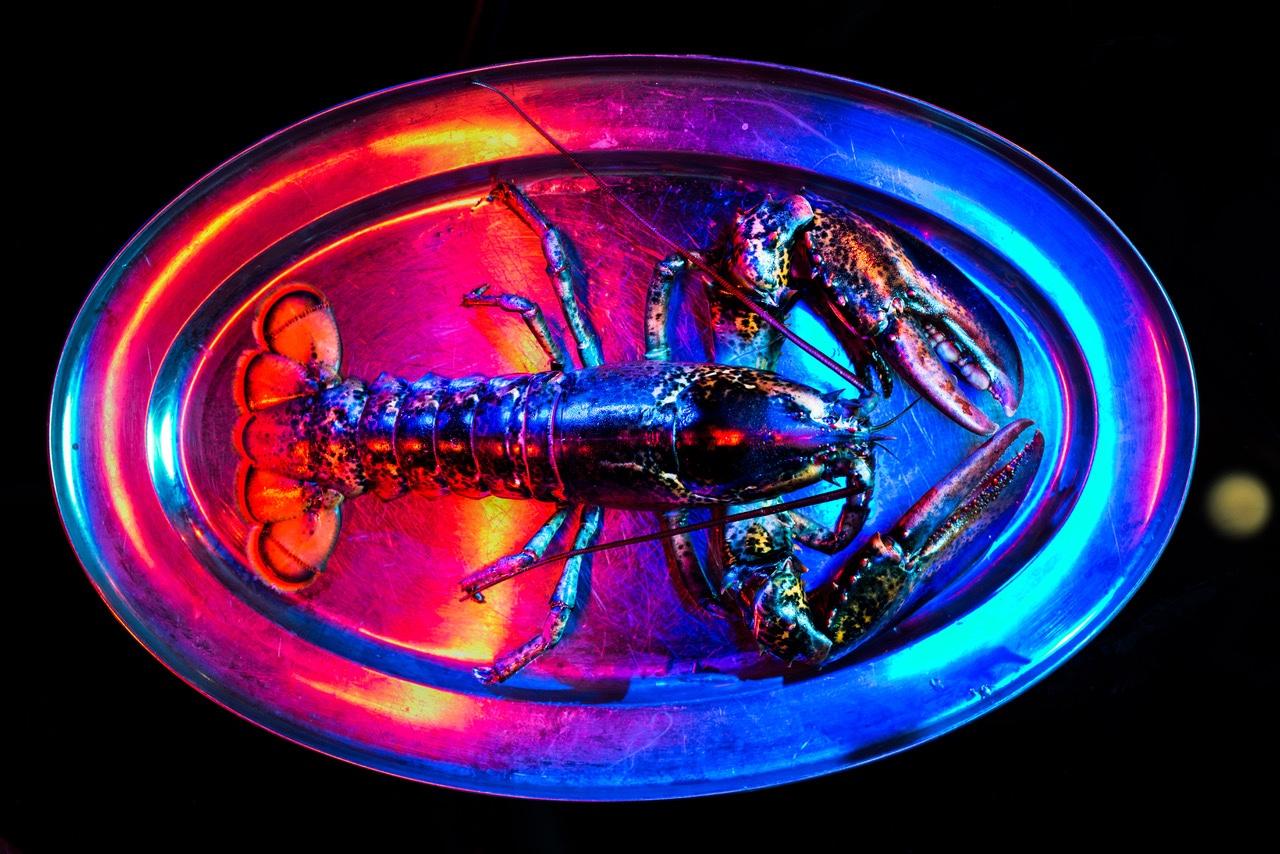 Jumbo Lobster-918