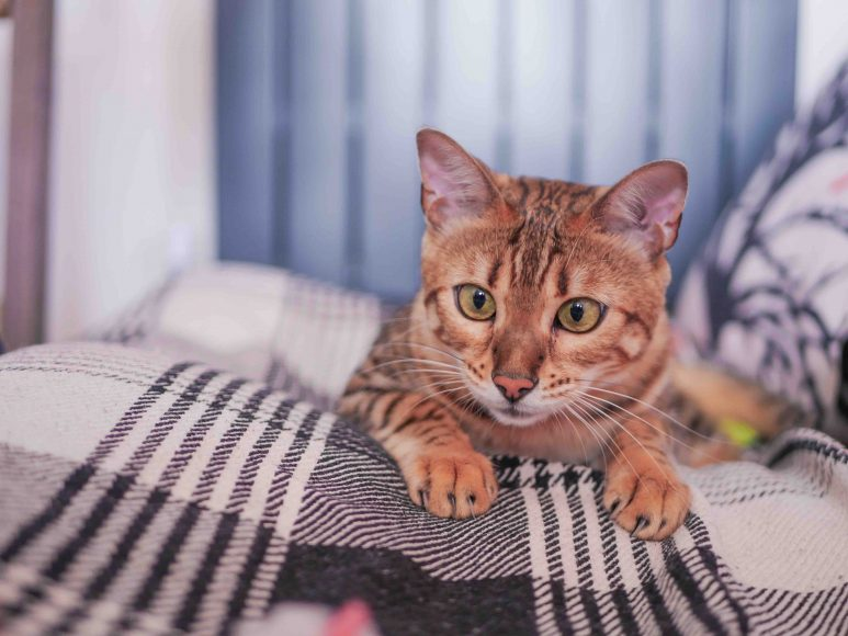 Trusted Housesitters has launched the 'Se-paw-ation Anxiety' campaign